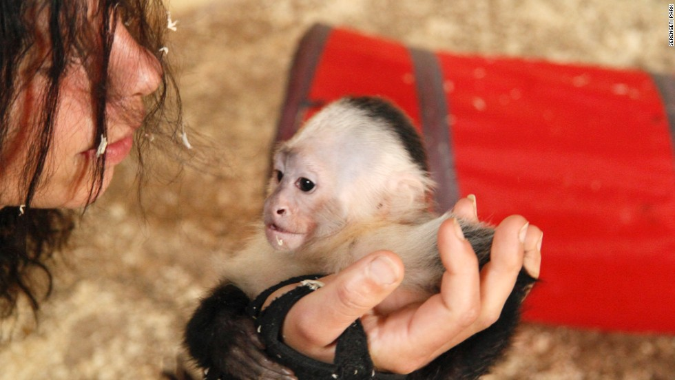 """Mally is the first to arrive at the zoo's new monkey area, says spokeswoman Juliane Gunkel. His new home consists of a tree-covered island dubbed """"Mally-bu."""""""