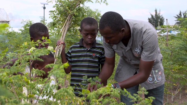 Haitian 'miracle tree' fights disease