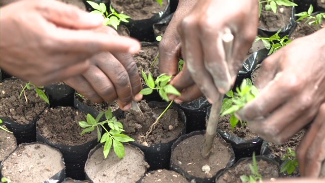 Planting a million trees a year