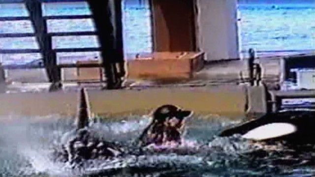 cnnfilms.blackfish.promo.video_00004015.jpg