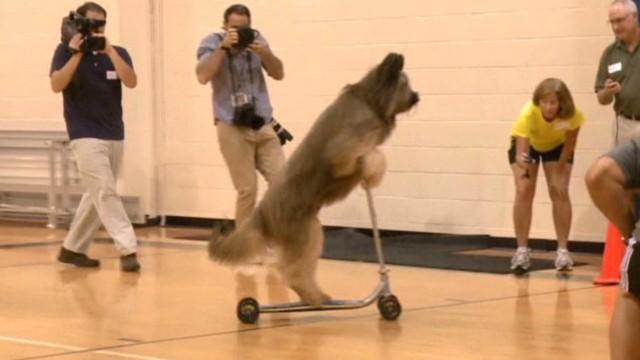 ga scooter dog breaks world record_00005913.jpg