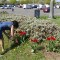 richard reynolds guerrilla gardening 5