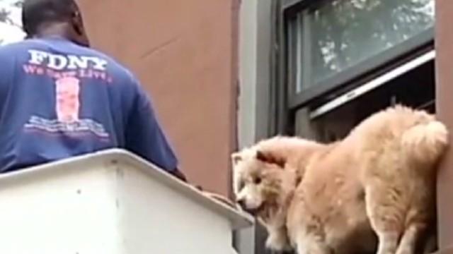 newday vo dog stuck on ledge_00000923.jpg