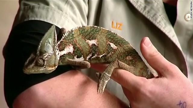 dnt aus zoo stolen reptiles_00011227.jpg