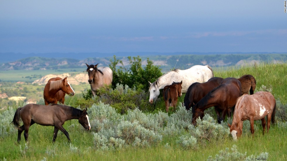 Feral horses roam the park's South Unit. The best times to observe wildlife are in the early morning and late evening.