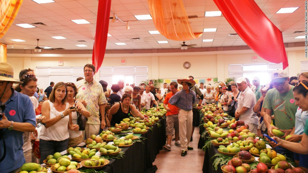 The mango auction is the only one of its kind in the world, according to the organizers. Attendees are taken through the world of the mango, and bid on their favorite varieties.