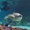 Animals nat aquarium calypso turtle1