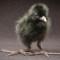 animal oregon zoo crake