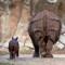 animals fort worth zoo rhino