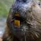animals oregon zoo beaver