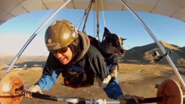 vo newday dog goes hang gliding_00003523.jpg