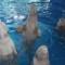 12 VIP Experiences USA Seaworld Parks