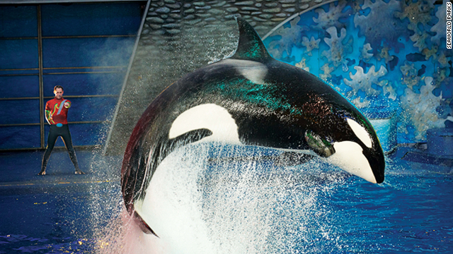 A scene from one of SeaWorld's popular orca shows.