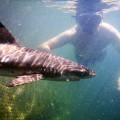Sharks Bali Sharks