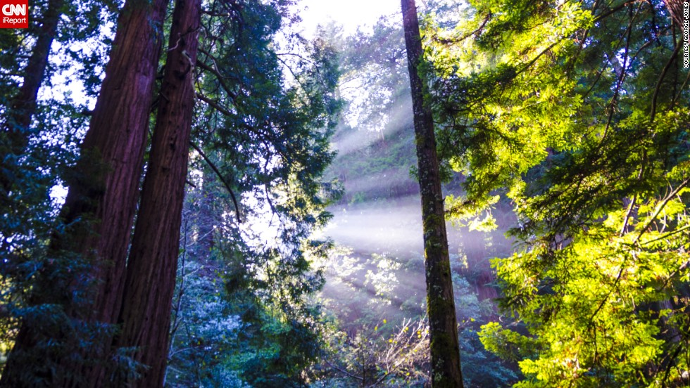 "In January, <a href=""http://ireport.cnn.com/docs/DOC-943488"">George Jones</a> visited Muir Woods National Monument on the Pacific Coast of California, just north of San Francisco. ""When the sun broke through the treetops, the fog warmed and it began to rise, giving us a spectacular view,"" he said."