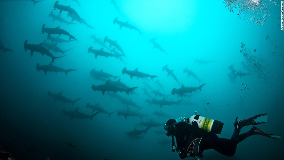 "<strong>Cocos Island, Costa Rica:</strong> Approximately 300 miles off the island that Jacques Cousteau once described as ""the most beautiful in the world,"" shark dive trips are offered on live-aboard boats."