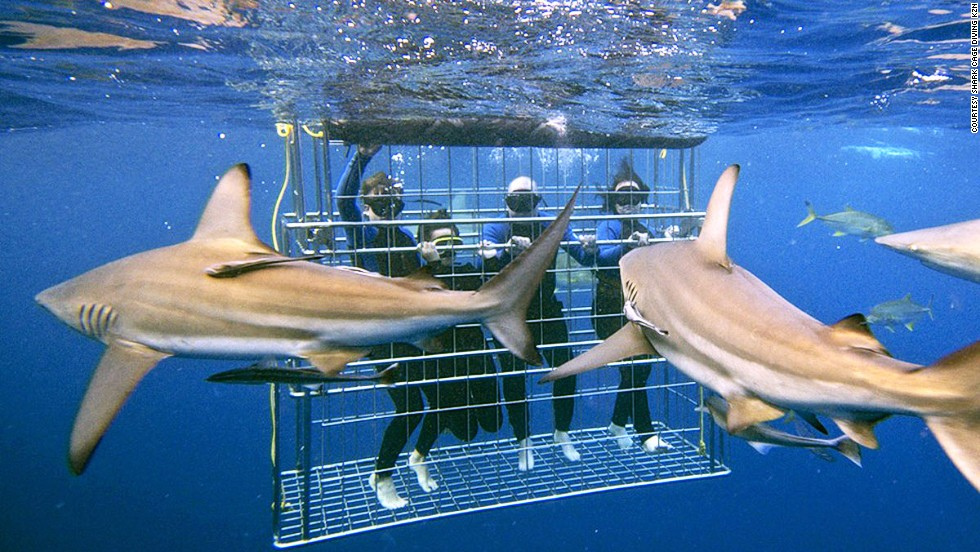 <strong>Kwazulu-Natal, South Africa:</strong> Nervy visitors can get close to reef sharks, ragged-tooth sharks and giant guitar sharks when cage diving in Kwazulu-Natal.