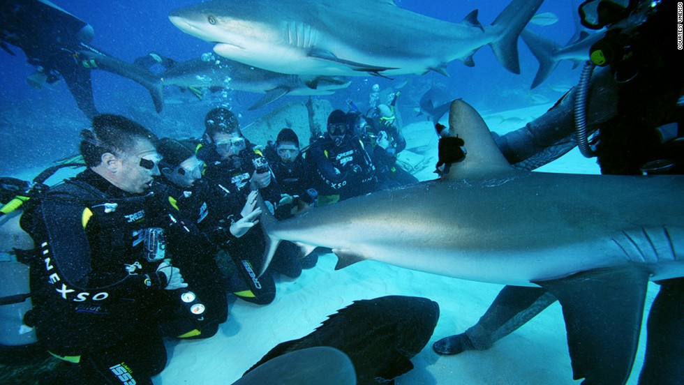 <strong>Bahamas: </strong>The Underwater Explorers Society (UNEXSO) conducts shark feeder courses.