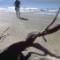 best coastal beaches rutherford beach louisiana