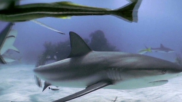 Lead pkg Shark Week_00000806.jpg