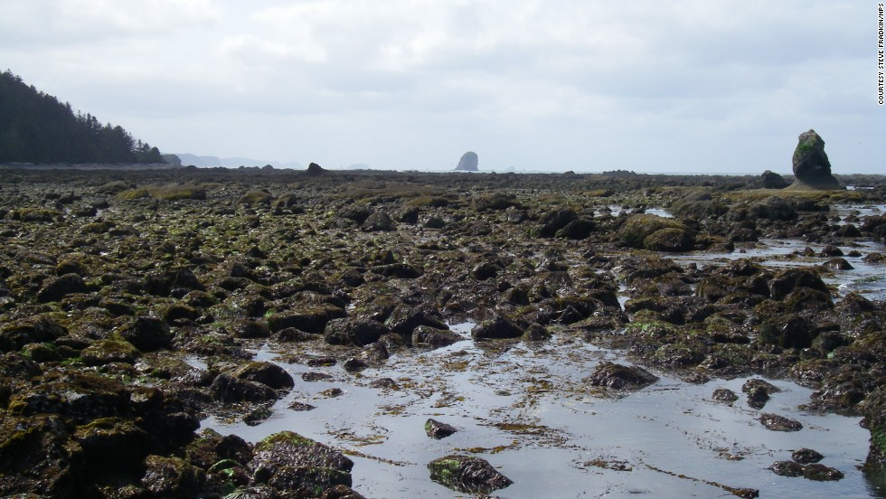 Coastal tide pools are home to a variety of maritime creatures.