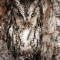 2013 National Geographic Photo Contest Portrait of an Eastern Screech Owl