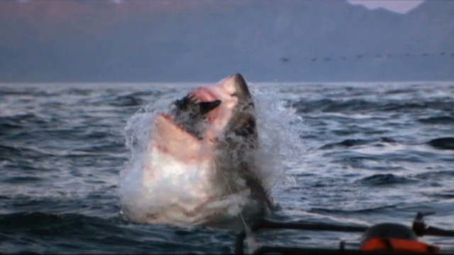 cnnee antonanzas pkg us discovery shark_00000323.jpg
