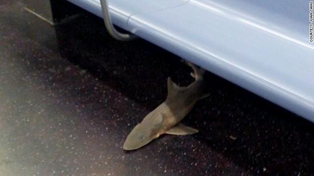 Shark carcass found on NYC subway