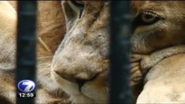 cnnee pkg romo freeing cage animals_00005207.jpg