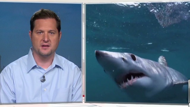 wbt sharks discovery tv_00021005.jpg