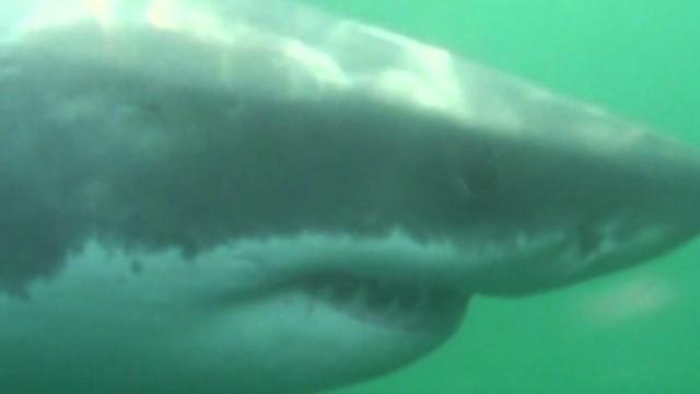 tsr dnt todd ocearch shark hunt_00030005.jpg