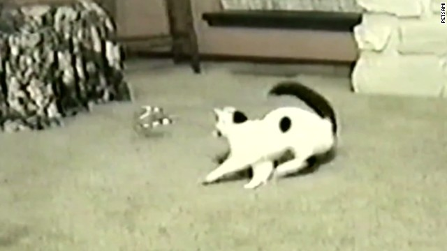 orig distraction cat gets dizzy chasing toy_00001313.jpg