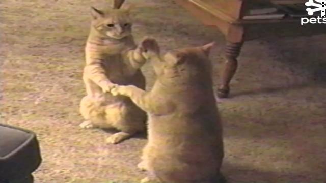 orig distraction pattycake kitties_00001915.jpg
