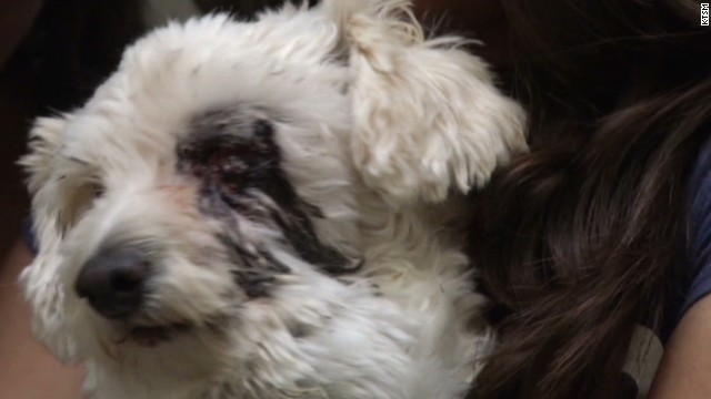 Dog takes rattlesnake bite to save girls