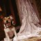 11 pet weddings
