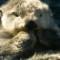 cutest animal 5 Sea otter