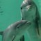 cutest animal 8 Bottlenose dolphin