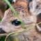 cutest animal 9 roe deer