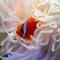 cutest animal 11 Clown fish