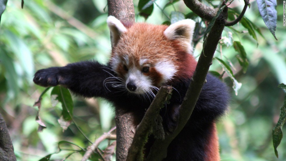 """""""If only my arms were a bit longer, I could make that branch!"""""""