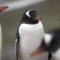 cutest animal 14 Penguin