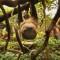 cutest animal 20 Sloth