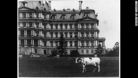 [Pauline, pet cow of President Taft on lawn, in front of the State, War and Navy Building, Washington, D.C.] Digital ID: (b&w film copy neg.) cph 3b40899 http://hdl.loc.gov/loc.pnp/cph.3b40899 Reproduction Number: LC-USZ62-94731 (b&w film copy neg.) Title: [Pauline, pet cow of President Taft on lawn, in front of the State, War and Navy Building, Washington, D.C.] Date Created/Published: [between 1909 and 1913] Medium: 1 photographic print. Reproduction Number: LC-USZ62-94731 (b&w film copy neg.) Rights Advisory: No known restrictions on publication. Call Number: LOT 12357-4 <item> [P&P] Notes: National Photo Company Collection. Subjects: Taft, William H.--(William Howard),--1857-1930--Animals & pets. Cows--Washington (D.C.)--1900-1920. Format: Photographic prints--1900-1920. Collections: National Photo Company Collection Bookmark This Record:     http://www.loc.gov/pictures/item/92510050/