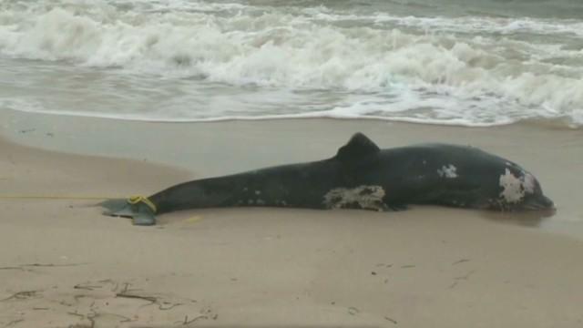 tsr todd bottlenose dolphin deaths_00004010.jpg