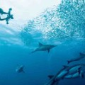 Amazing sights - sardine run