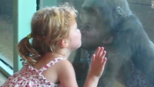 orig distraction girl and baby gorilla friends_00004511.jpg