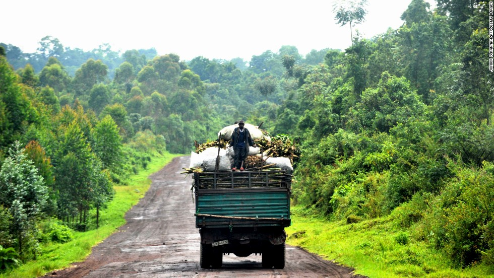 The Congo Basin rainforest is one of the natural wonders of the world, home to 10,000 species of plants.