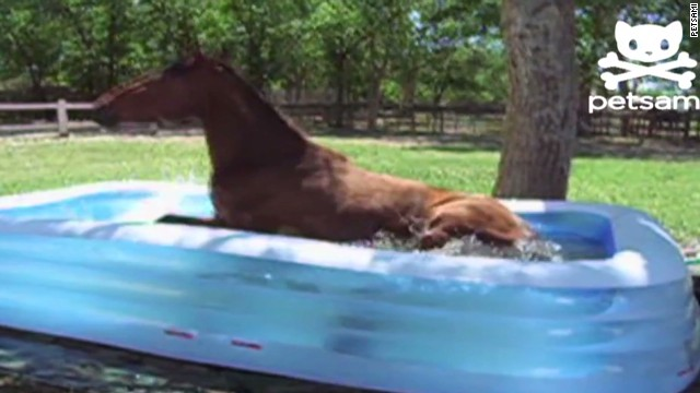 orig distraction horse splashes in pool_00003806.jpg