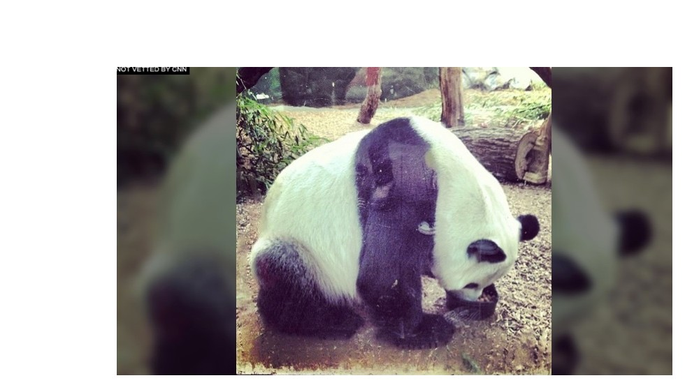 Dad Yang Yang is alone, away from mom and babies.