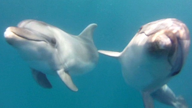 Thousands of dolphins slaughtered for shark bait
